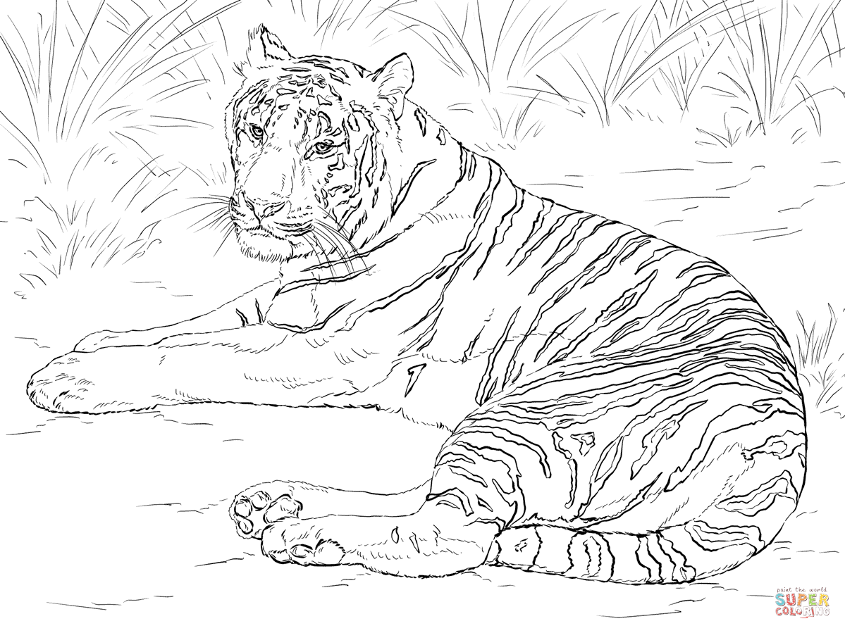 Siberian Tiger Laying down coloring page from Tigers