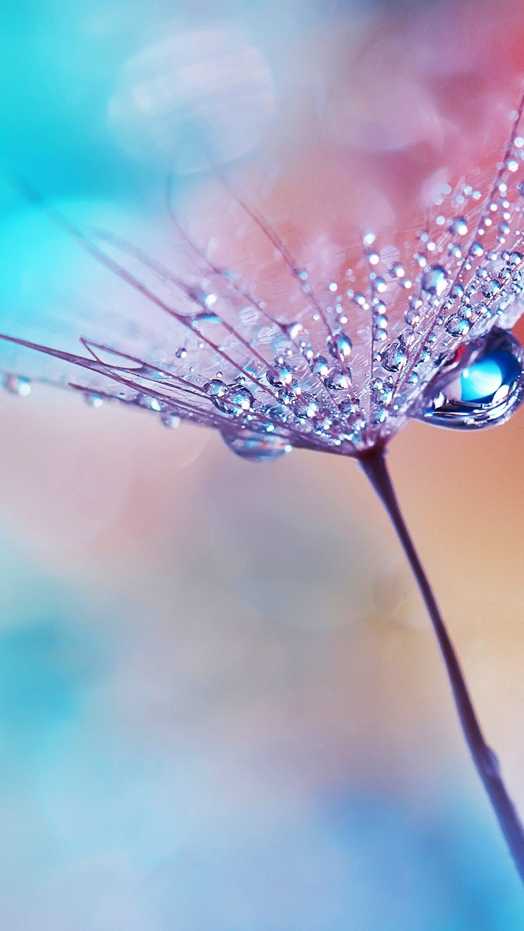 Wallpapers For Android Flower Water Drops Dew Macro