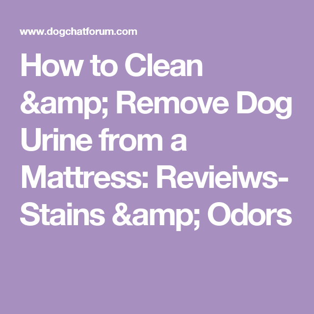 How To Clean Amp Remove Dog Urine From A Mattress Revieiws
