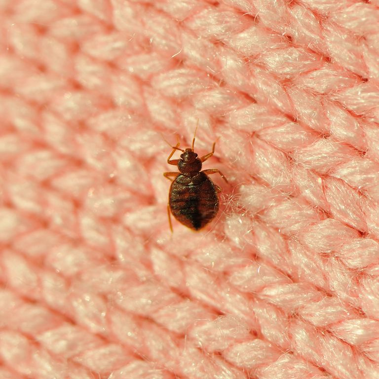 Zippered Mattress Encasement Bed bugs, Rid of bed bugs