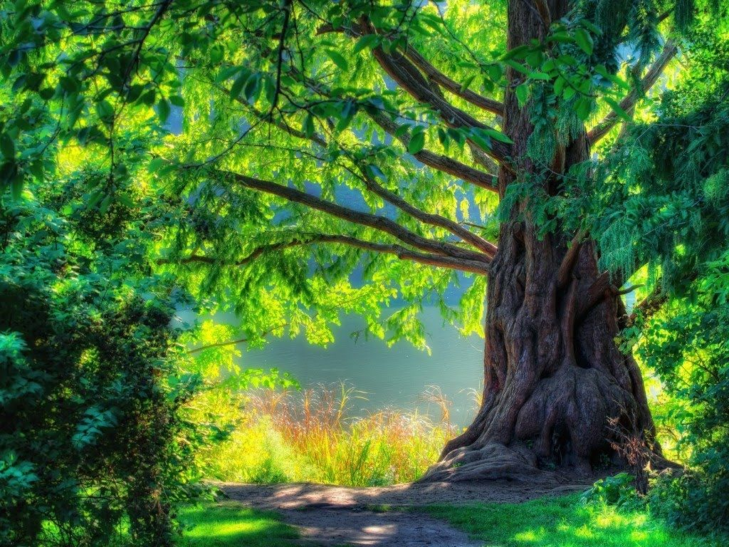 3 Hours Relaxing Celtic Fantasy Music Fairy Tale Background For Relax Dream Massage Study Nature Tree Summer Trees Landscape