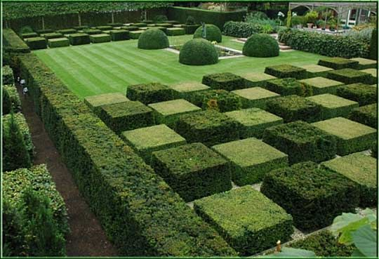 Checkerboard topiary garden Identity unknown - please advise, thanks!