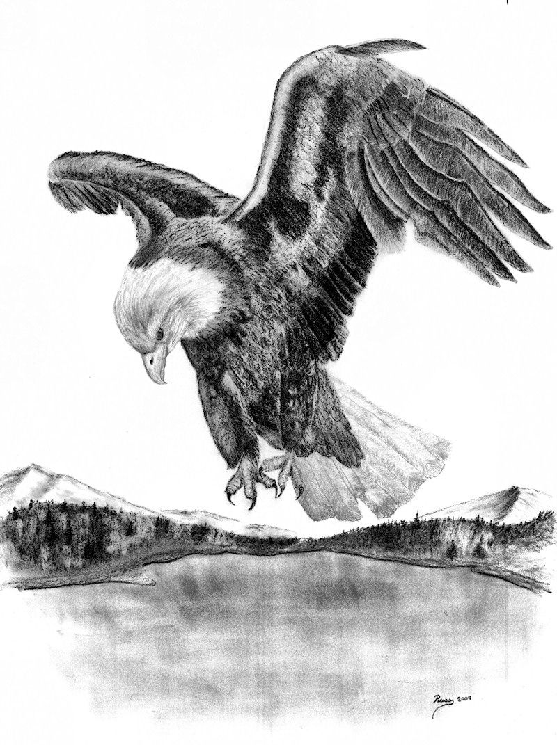 Drawings of american bald eagles charcoal drawing american bald eagle in flight