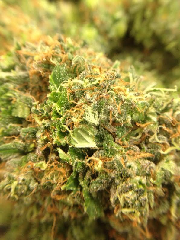 BUDS, BUDS, BUDS Pineapple Express - Sativa Green Crack