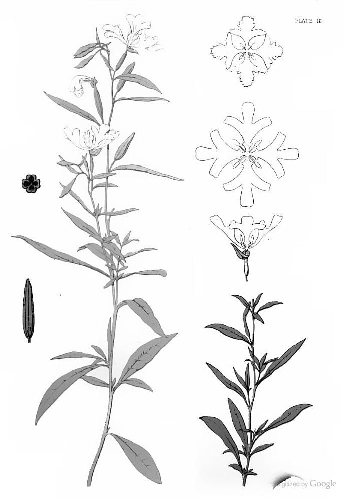 A series of sketches from nature of plant-form