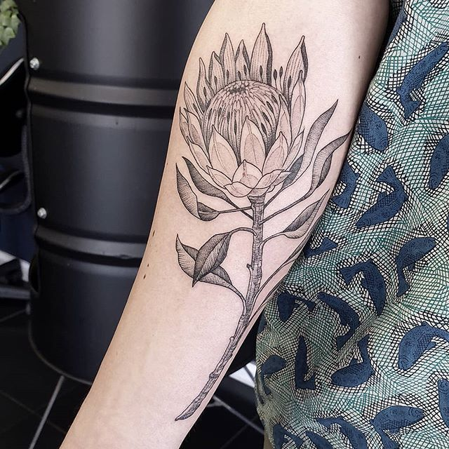 Fine Line Protea On Dean Garthstaunton Tattoo Blacktattoo Protea Flower Flowertattoo Cape Bird Shoulder Tattoos Fine Line Tattoos Inspirational Tattoos