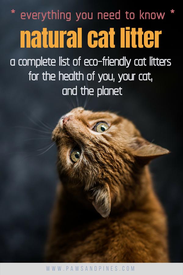 Best Natural Cat Litter A Complete List of EcoFriendly