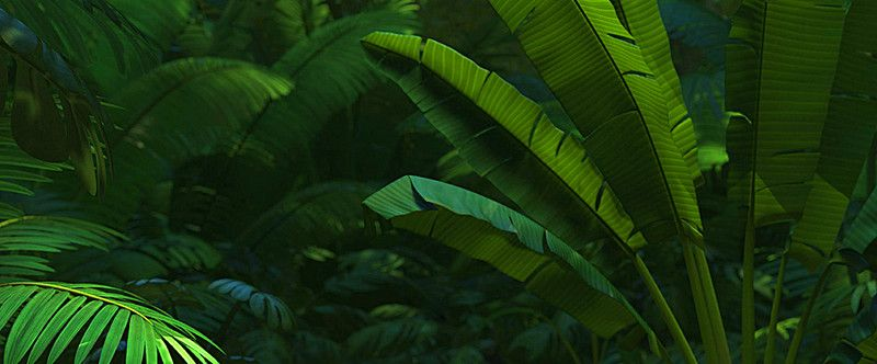 Tropical forests are forested landscapes in tropical regions: Tropical Forest Leaves Background Leaf Background Tropical Background Background