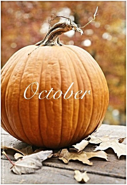 Pumpkin October Image #helloautumn