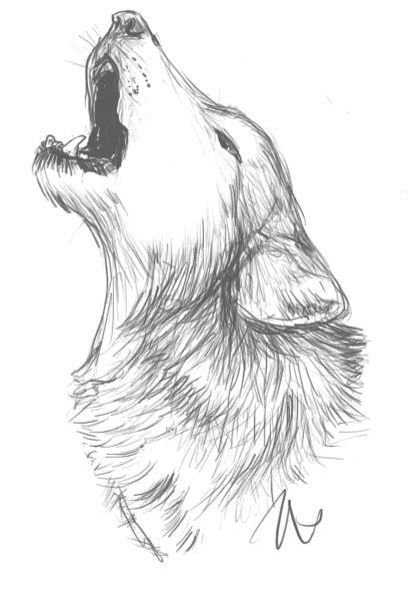 Lobo Wolf Dibujo Arte Dibujo A Mano Lobos Wolf Wolf Sketch