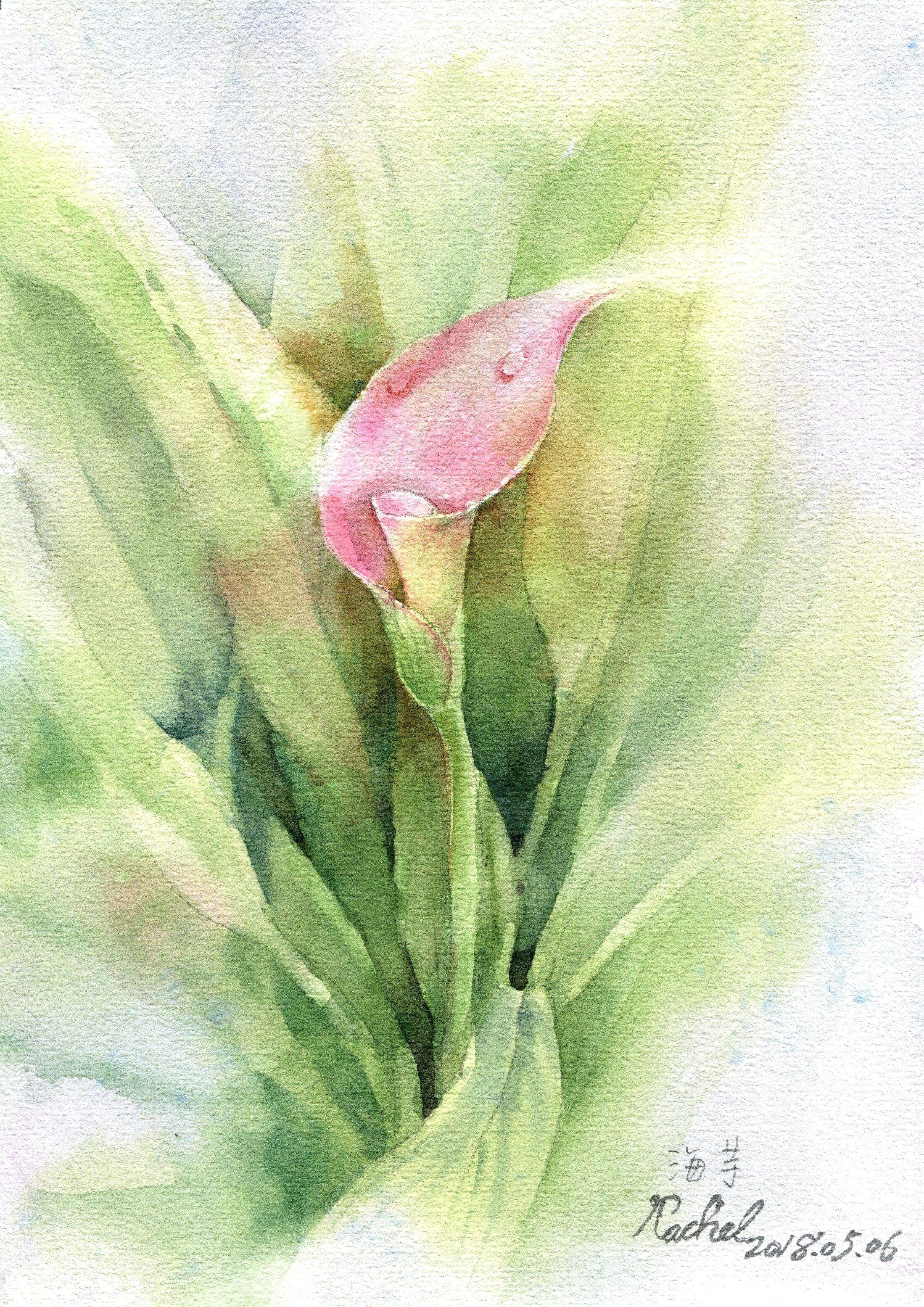 海芋 Rachel愛畫畫 植物畫 Watercolor 水彩 Plant Leaves