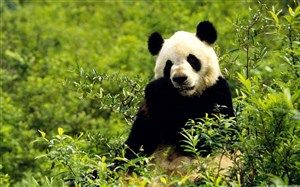 Pengertian Flora Dan Fauna Panda Dunia Flora