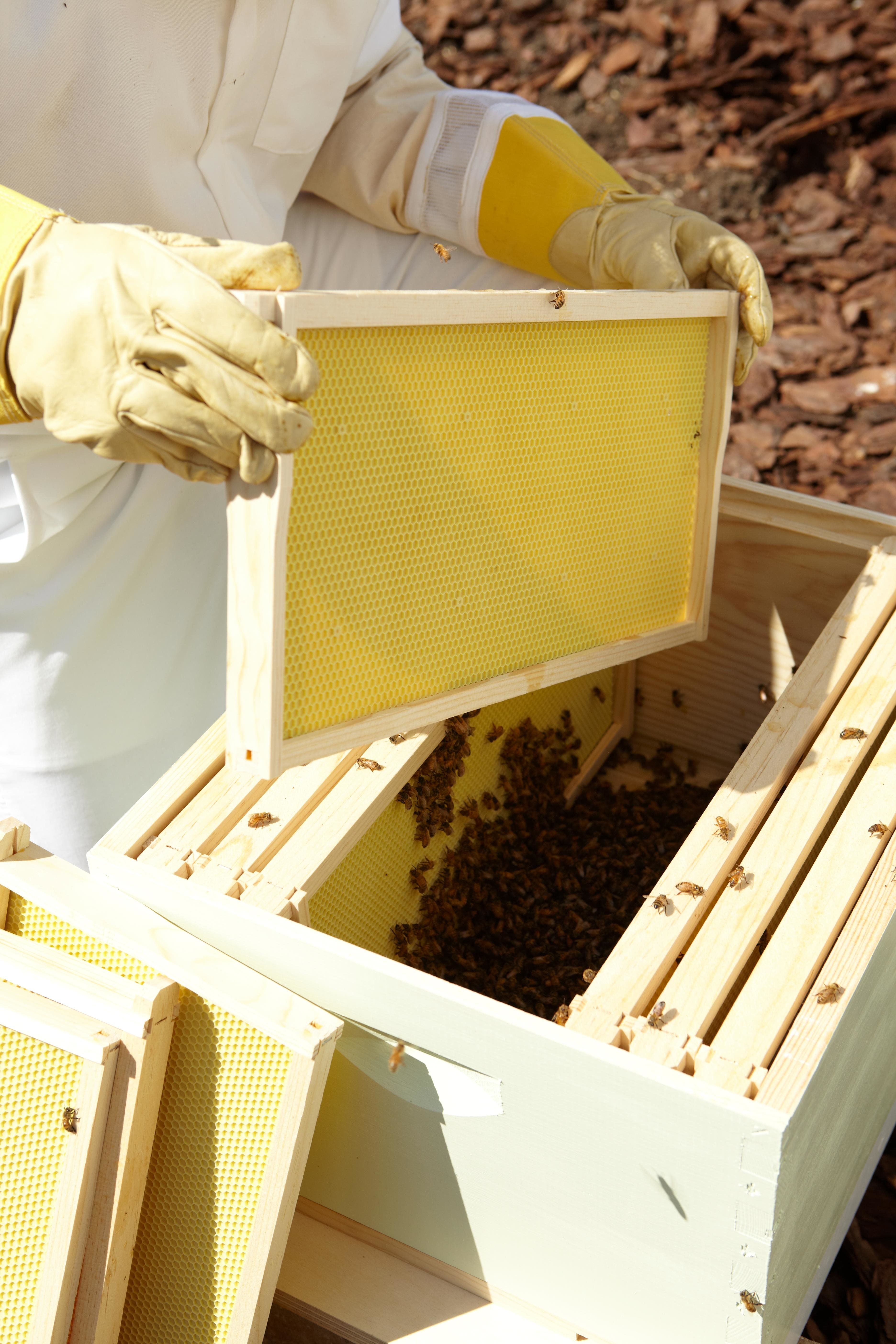 5 Steps to Start a Beehive in Your Backyard in 2020 | Bee ...