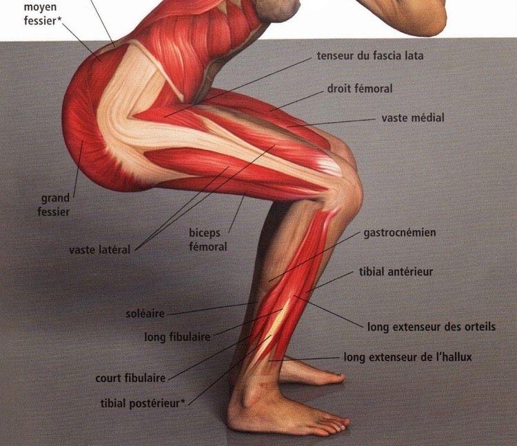 Oberschenkel muskeln