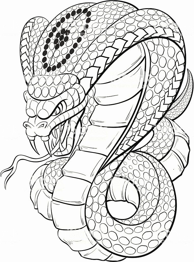 King Cobra King Cobra Hood Extended Coloring Pages Animal