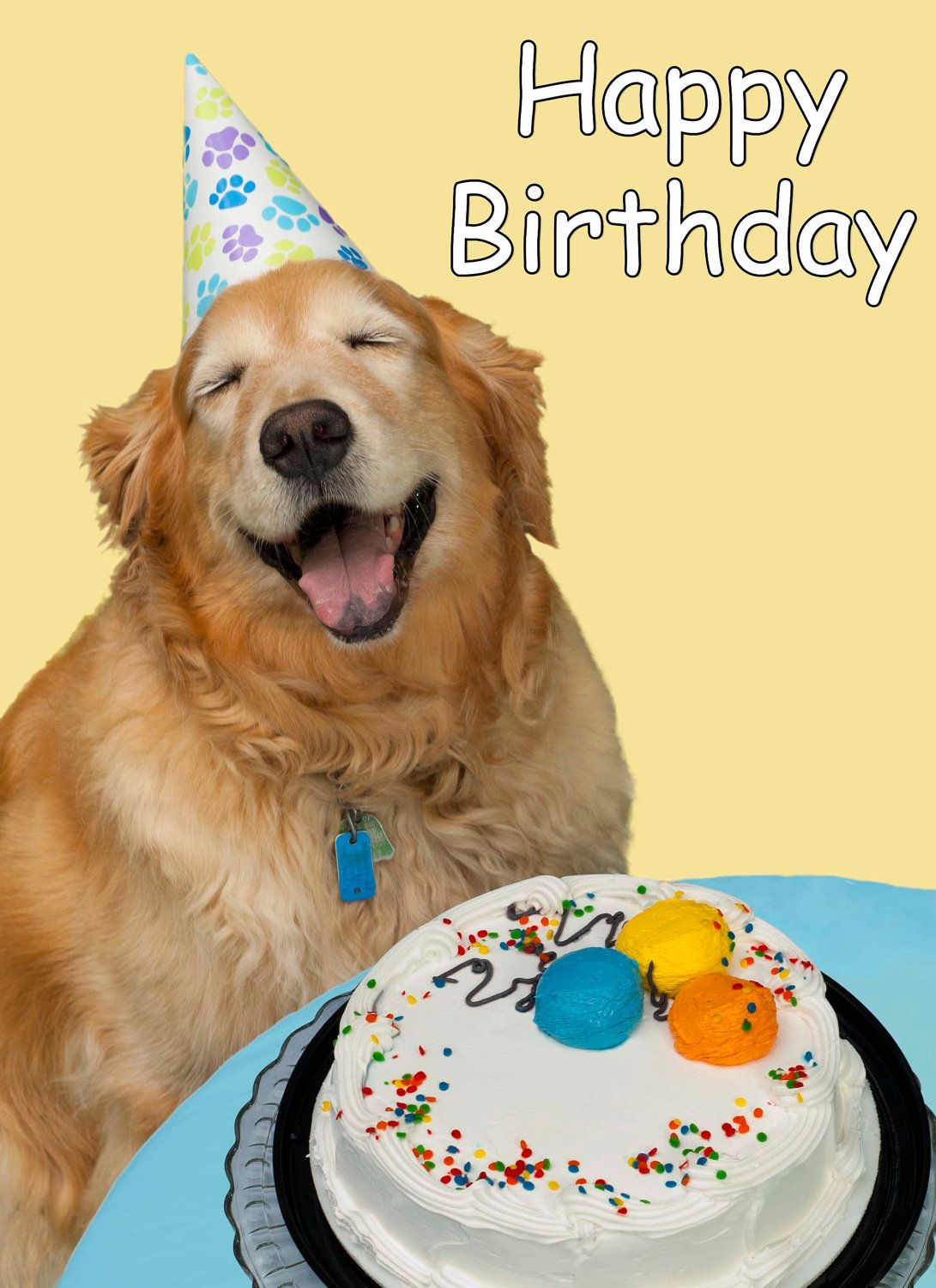 it's someone's birthday today :) | Animals | Pinterest ...