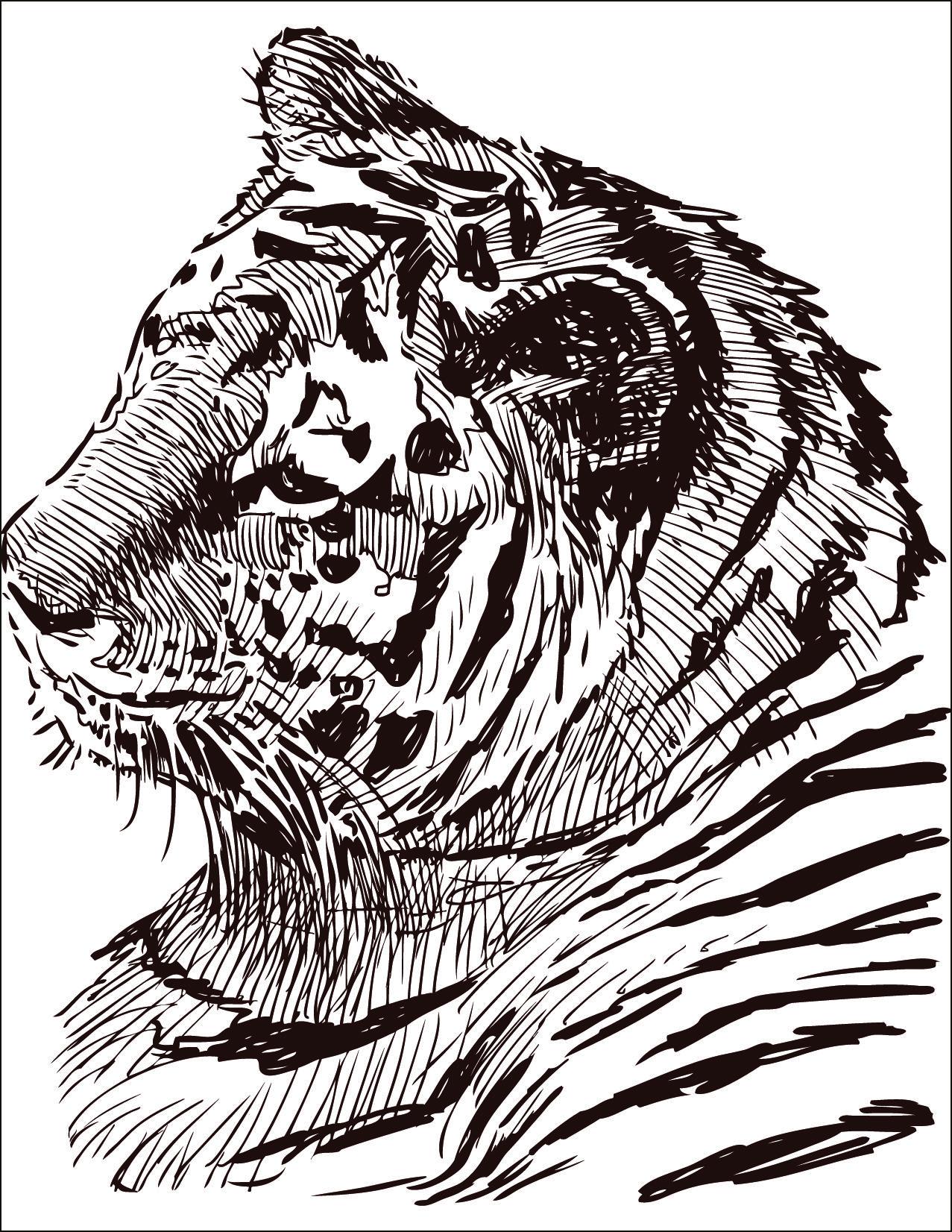 dessin  colorier gratuit félin tigre