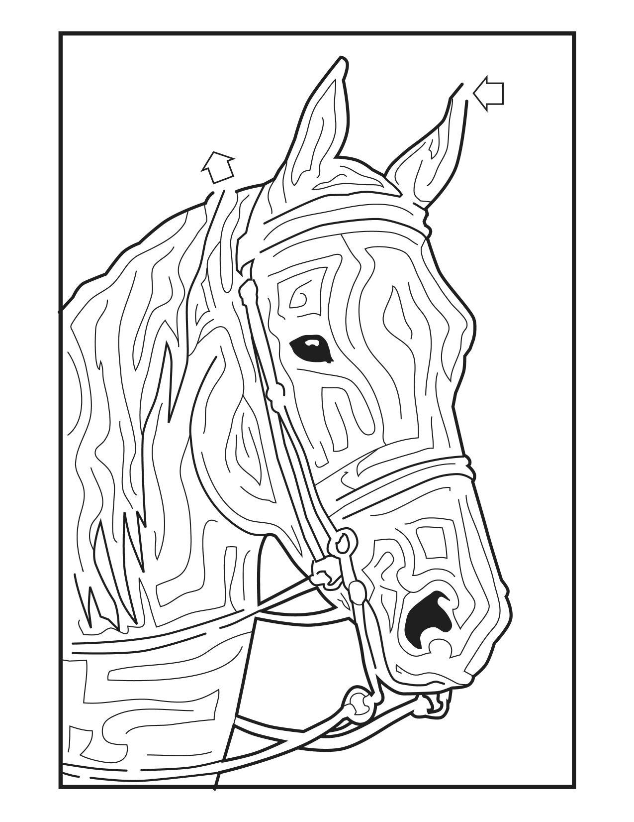 Horse Mazes