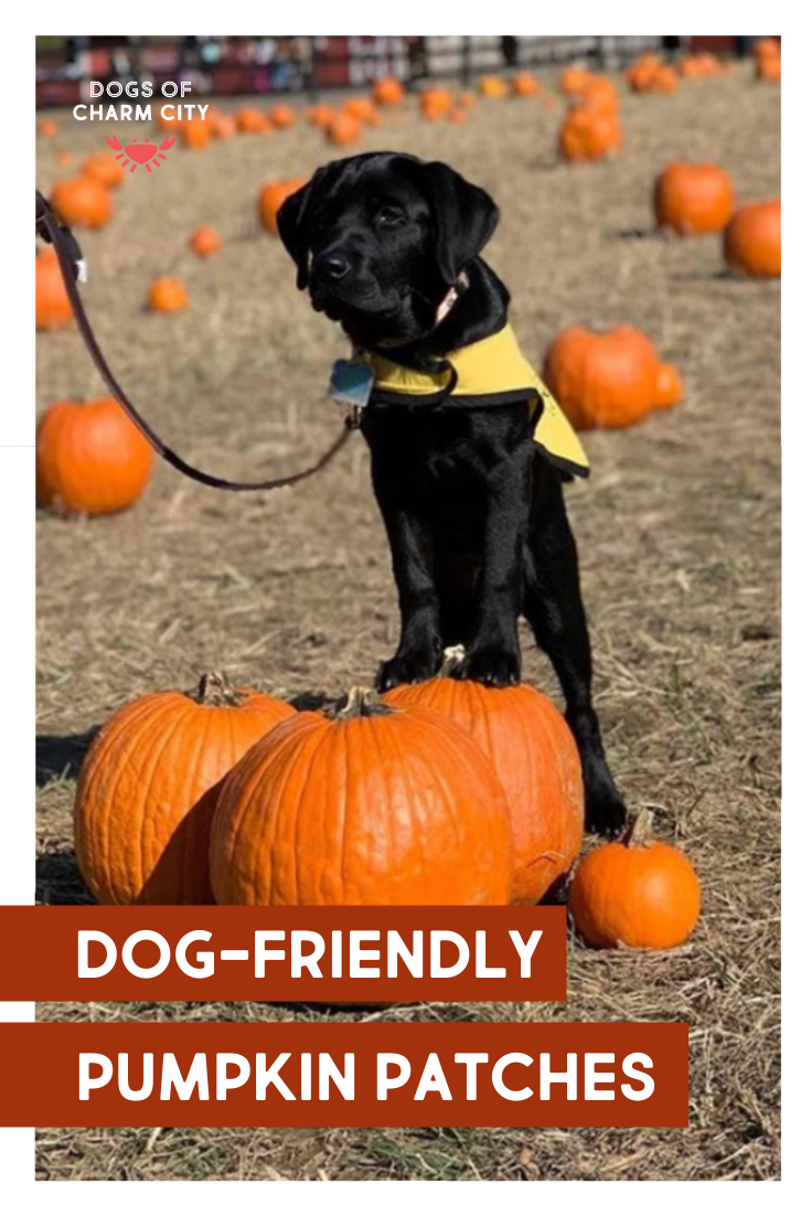 Pumpkin Patches Near Me Dog Friendly