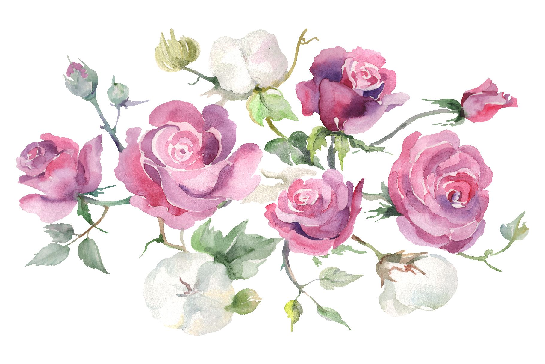 Bouquet With Pink Roses And Cotton Watercolor Png Graphic By Mystocks Creative Fabrica Watercolor Flowers Pink Roses Watercolor
