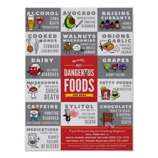 The World S Most Dangerous Foods For Dogs Poster Zazzle Com