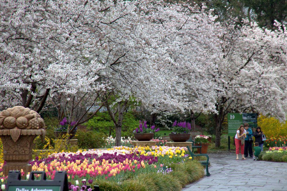 Dallas Arboretum And Botanical Garden Dallas Arboretum Arboretum Botanical Gardens