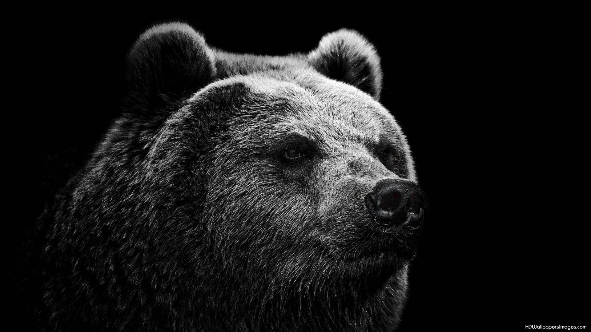 Bear Wallpaper High Resolution Coca Cola Fantasy 1920x1080 Bears