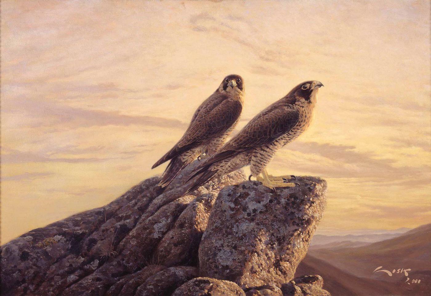 Halcon peregrino | Falcons art - رســـم صقـــور | Pinterest ...
