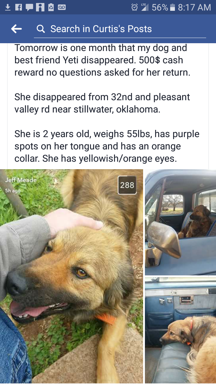 Lost Dog in Oklahoma. Please help... http://ift.tt/2qhmItF