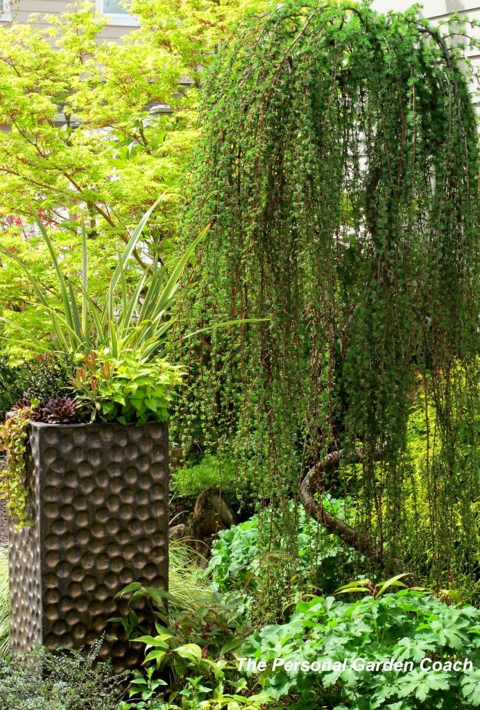 Focal Point Trees Most Beautiful Gardens Ornamental 400 x 300