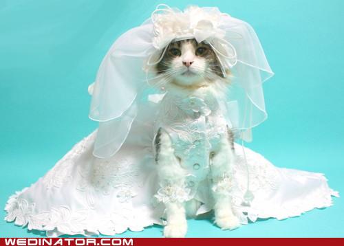cat wedding dress short train wedding stuffs