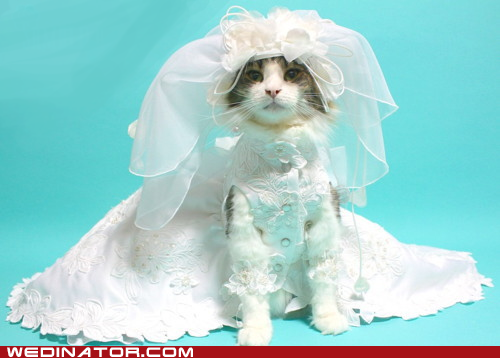cat wedding dress short train wedding stuffs