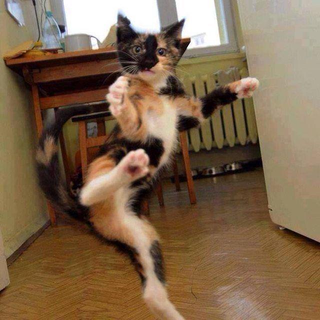 Karate-cat!