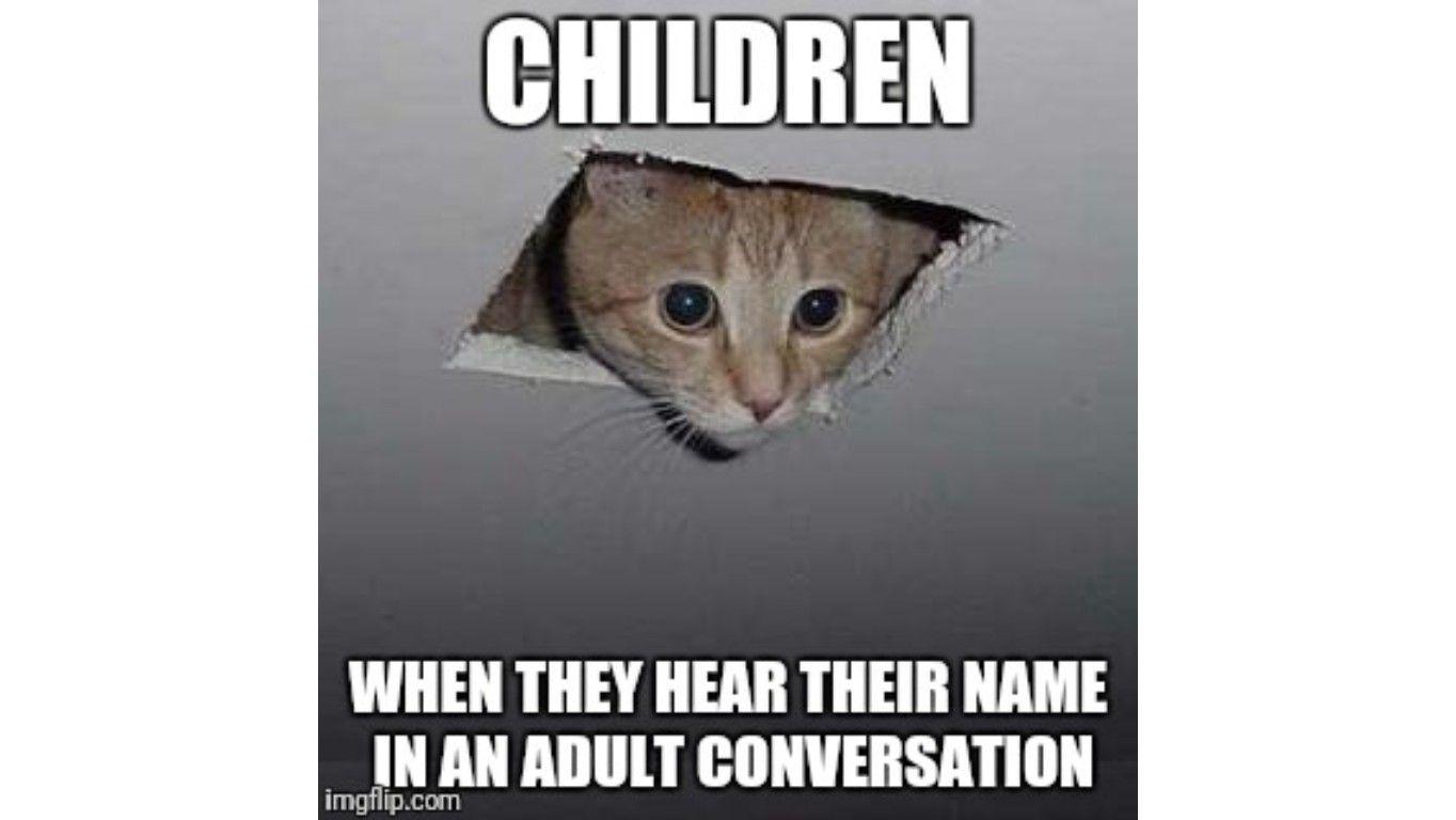 Funny Peeking Cat Meme In 2021 Cat Memes Cat Owner Problems Funny Cat Memes