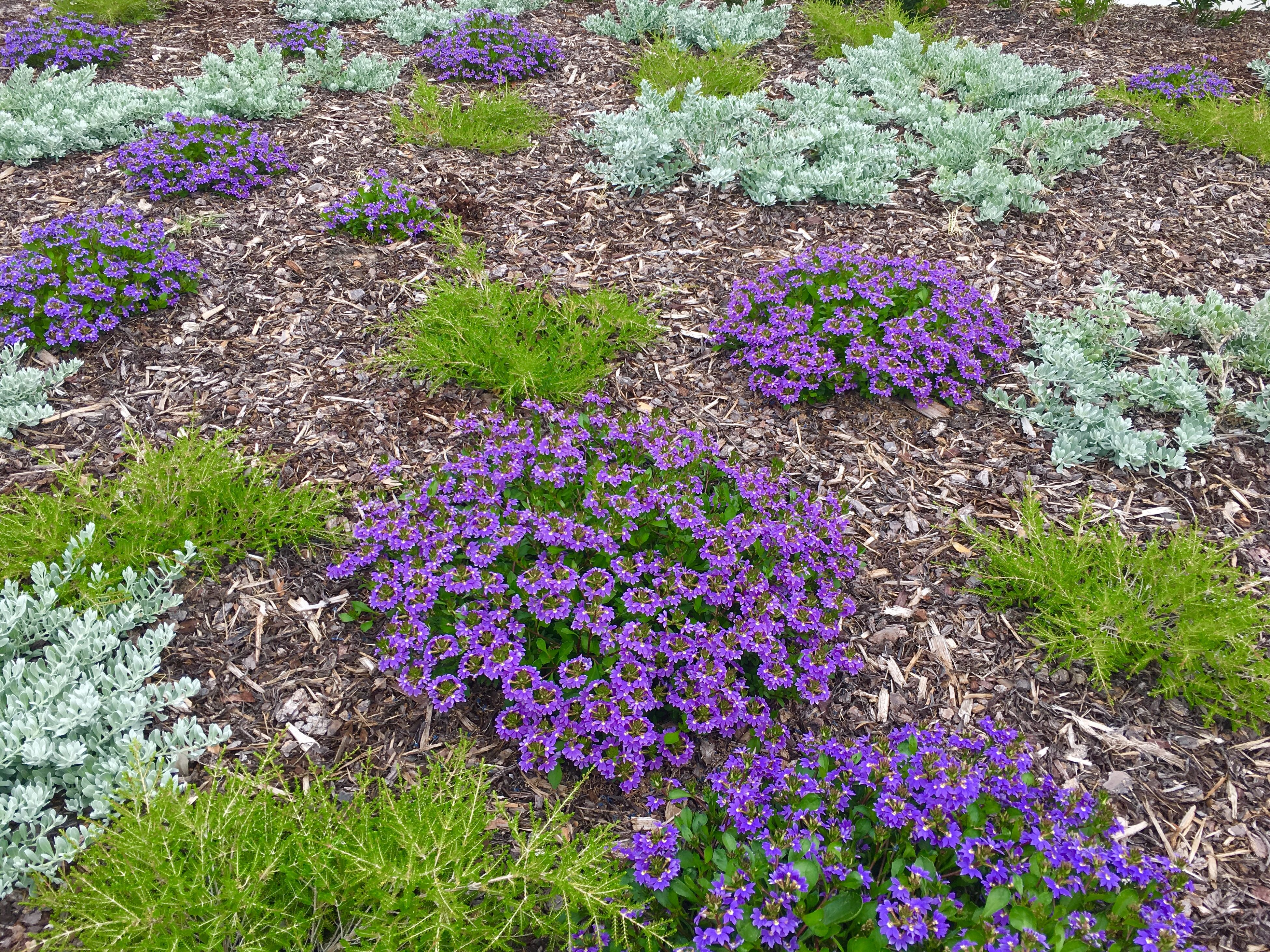 Australian Native Garden Ground Covers And Low Shrubs 400 x 300