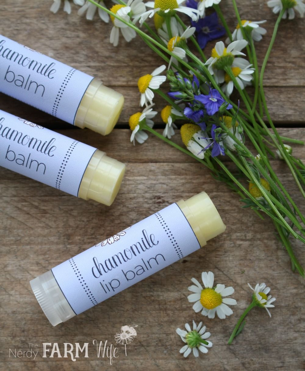 This easy DIY lip balm recipe features dried chamomile flowers for