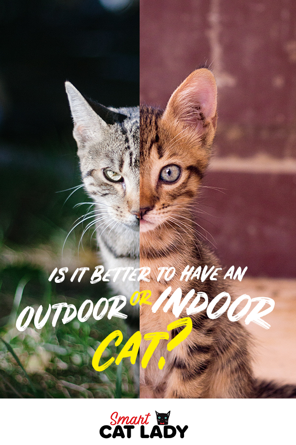 Is It Better To Have An Indoor Cat Or An Outdoor Cat Outdoor Cats Indoor Cat Cats