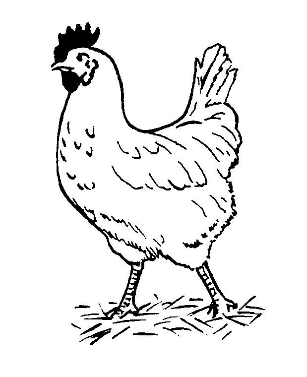 tekening kip dieren kleurplaten dier sjablonen kleurplaten