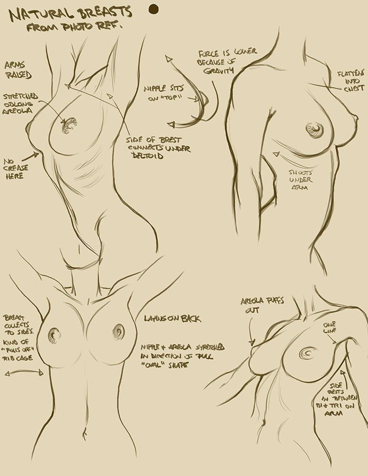 Anatomía de una dama