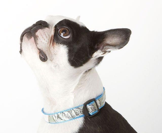 Fancy - The Mag Dog Collar by Shipley & Halmos