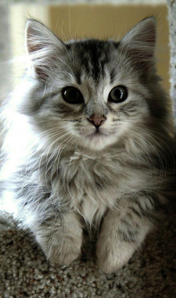 catsandkittens Cute cats, Cute animals, Cute cats and