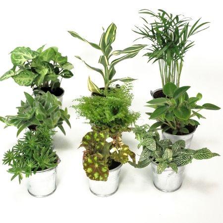 mini plante verte seau zinc coups de coeurs plantes