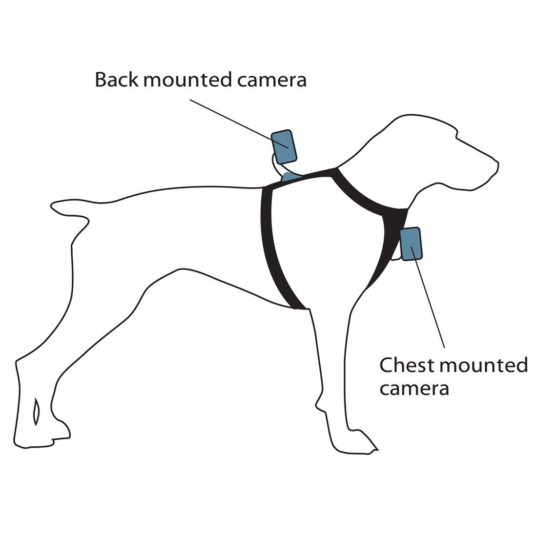 Kurgo Dog Products Tru Fit Smart Harness With Camera Mount