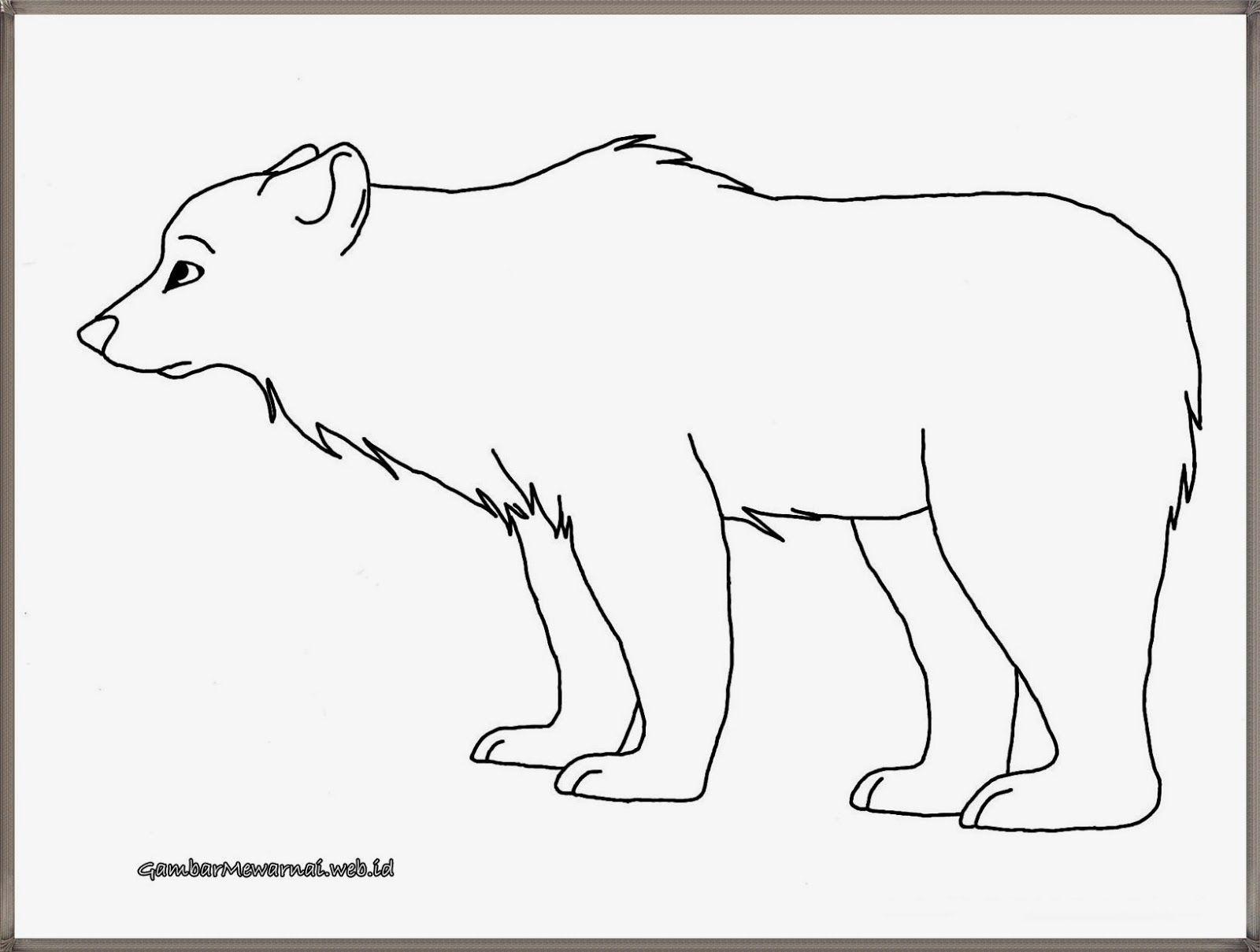 Mewarnai Gambar Beruang Kutub Pelangicahayapertiwi Bear