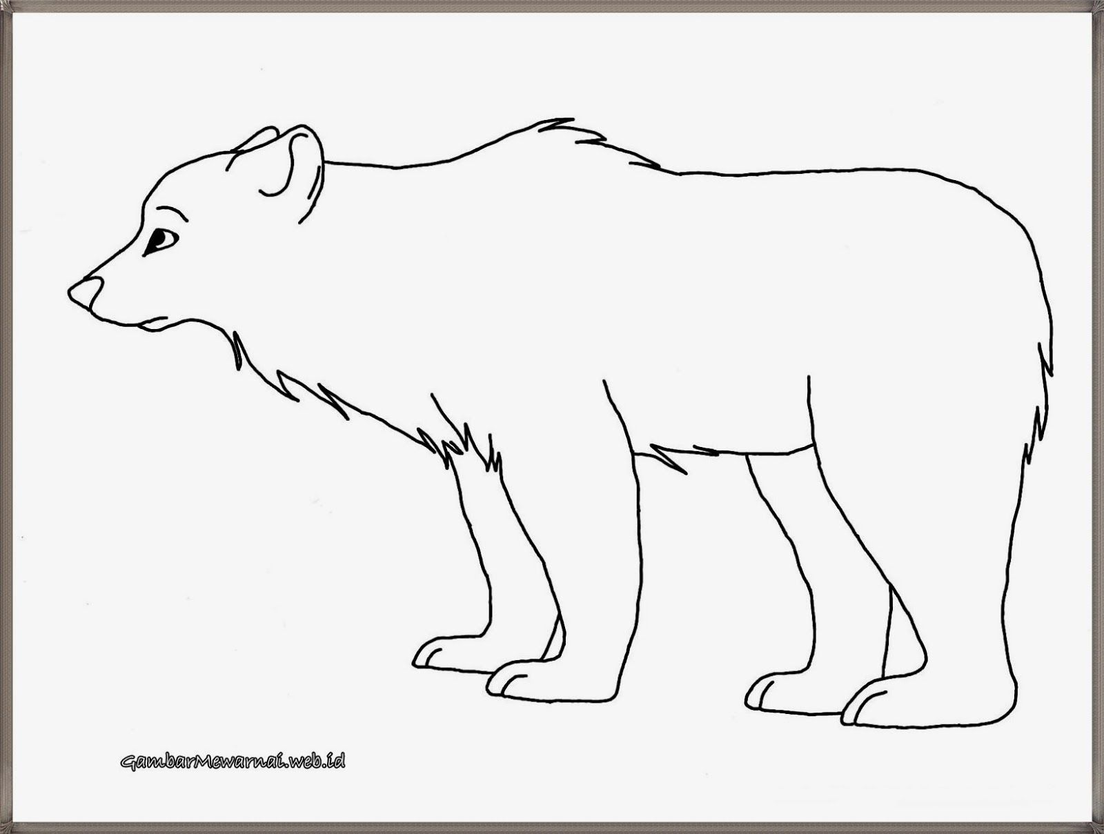 Mewarnai Gambar Beruang Kutub Beruang Kutub Warna Gambar