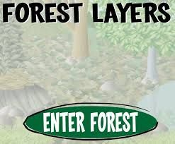 Interactive website on the layers of the forest