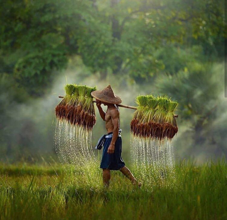 20 Best Nature Wallpapers In Hd Free Wallpaper In 1980 X 1080 Size Kehidupan Pedesaan Pemandangan Petani
