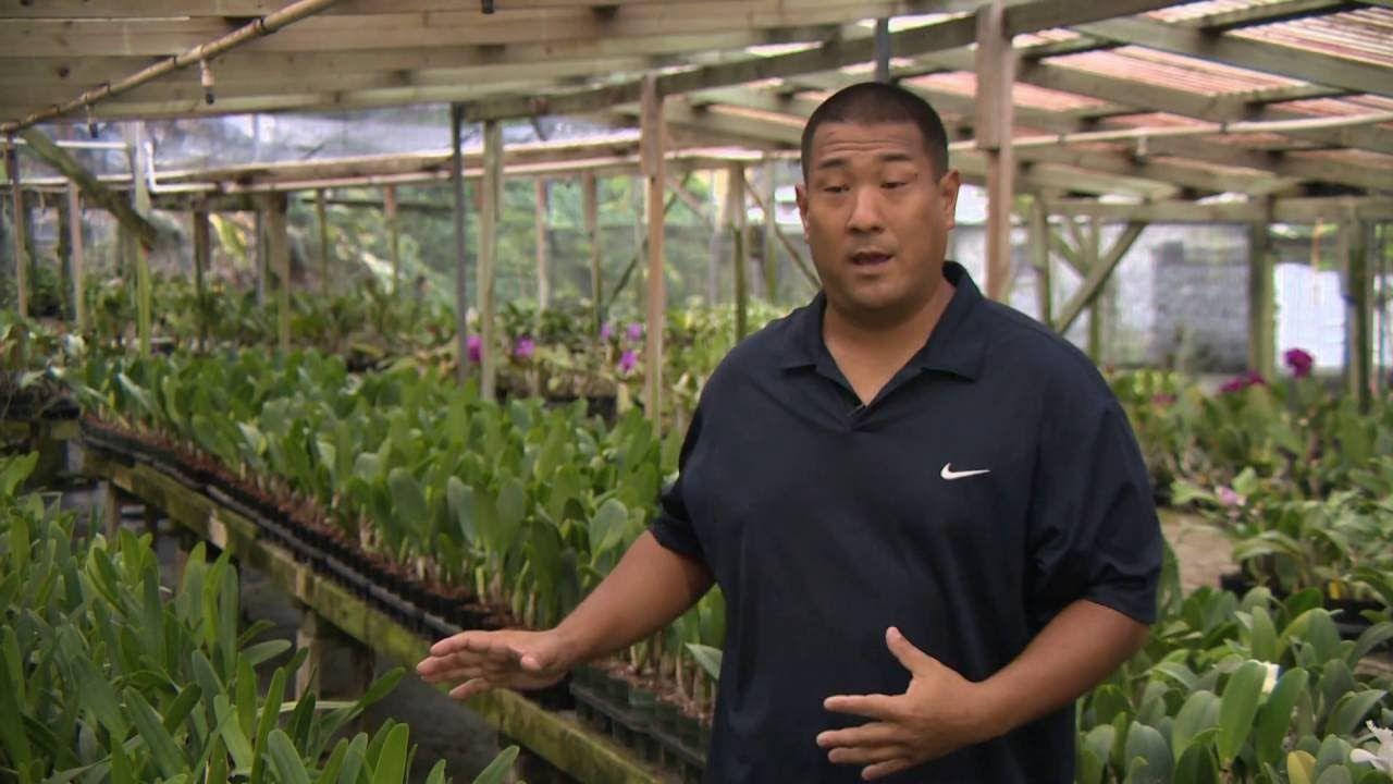Kawamoto Orchid Nursery Pbs