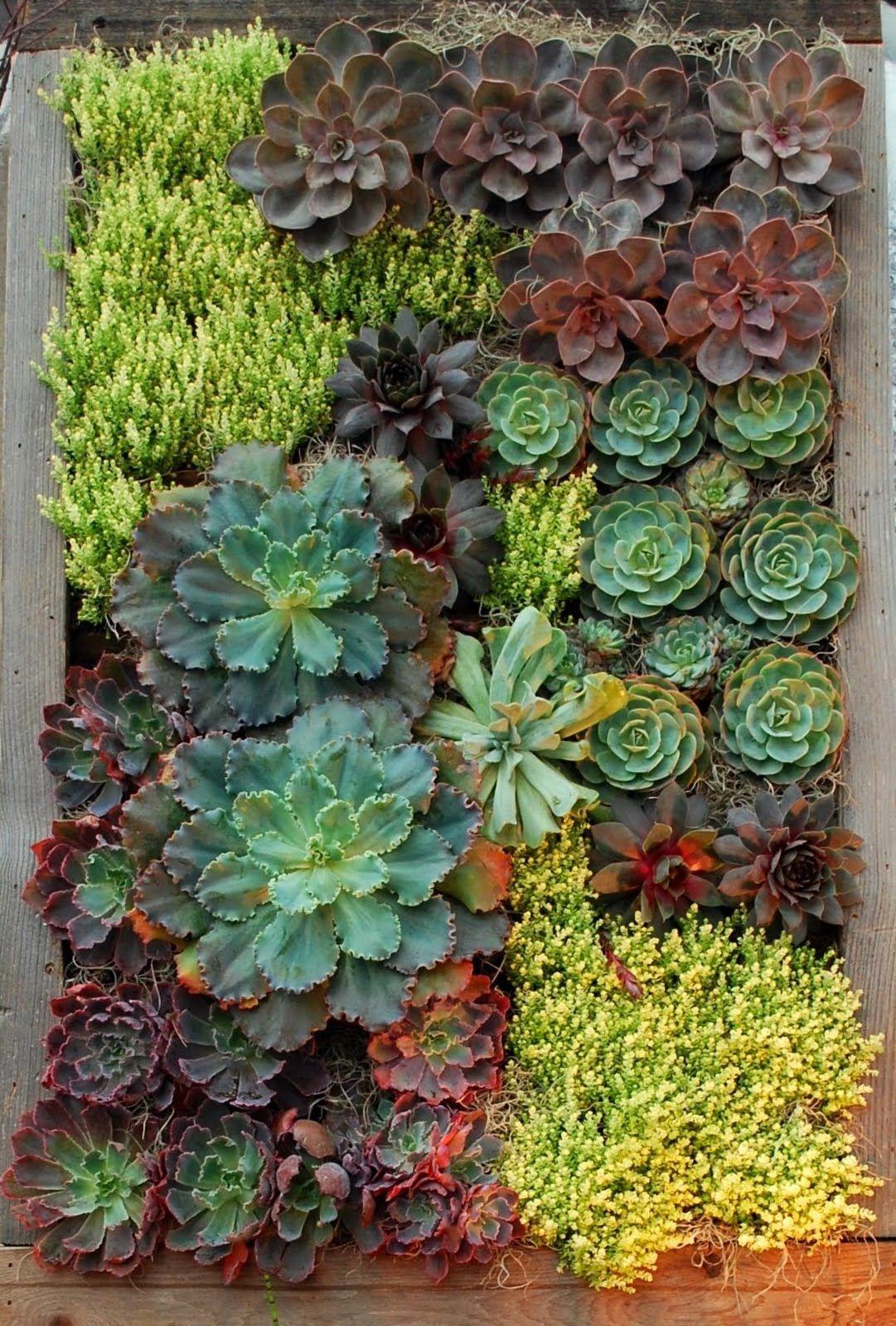 Mur Vegetal Plante Grasse hermoso pedacito de jardín de plantas q requieren poco riego