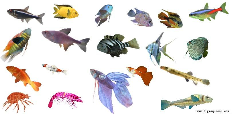 Freshwater fish aquarium screen saver free download mare for Freshwater fish compatibility